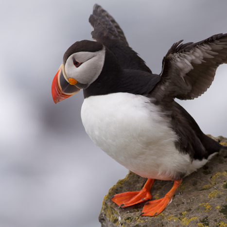 Puffin Patrol, kayaking in Herm @ Herm |  |  |